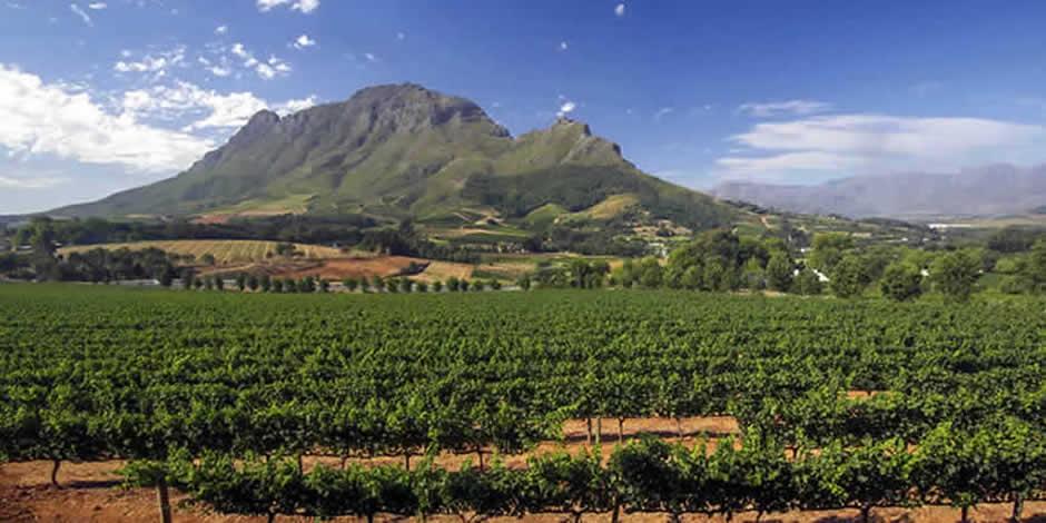 Città del Capo - Winelands