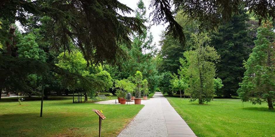 Lucca - Orto botanico