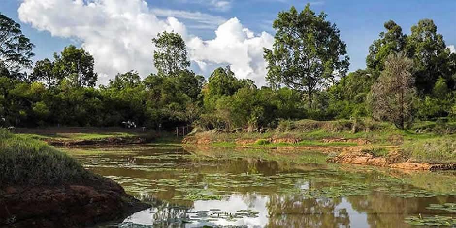 Nairobi - Karura Forest
