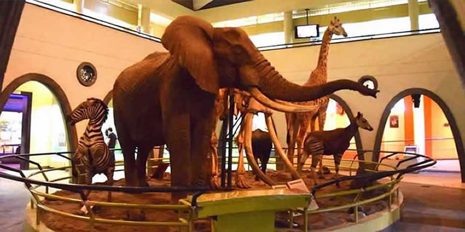 Nairobi - National Museum